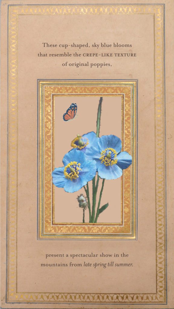 Blue-Poppies--Card2